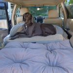 Ace Car Bed